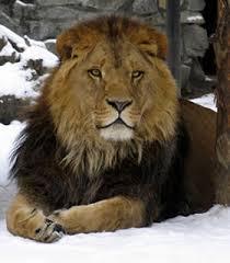 external image aslan.jpg